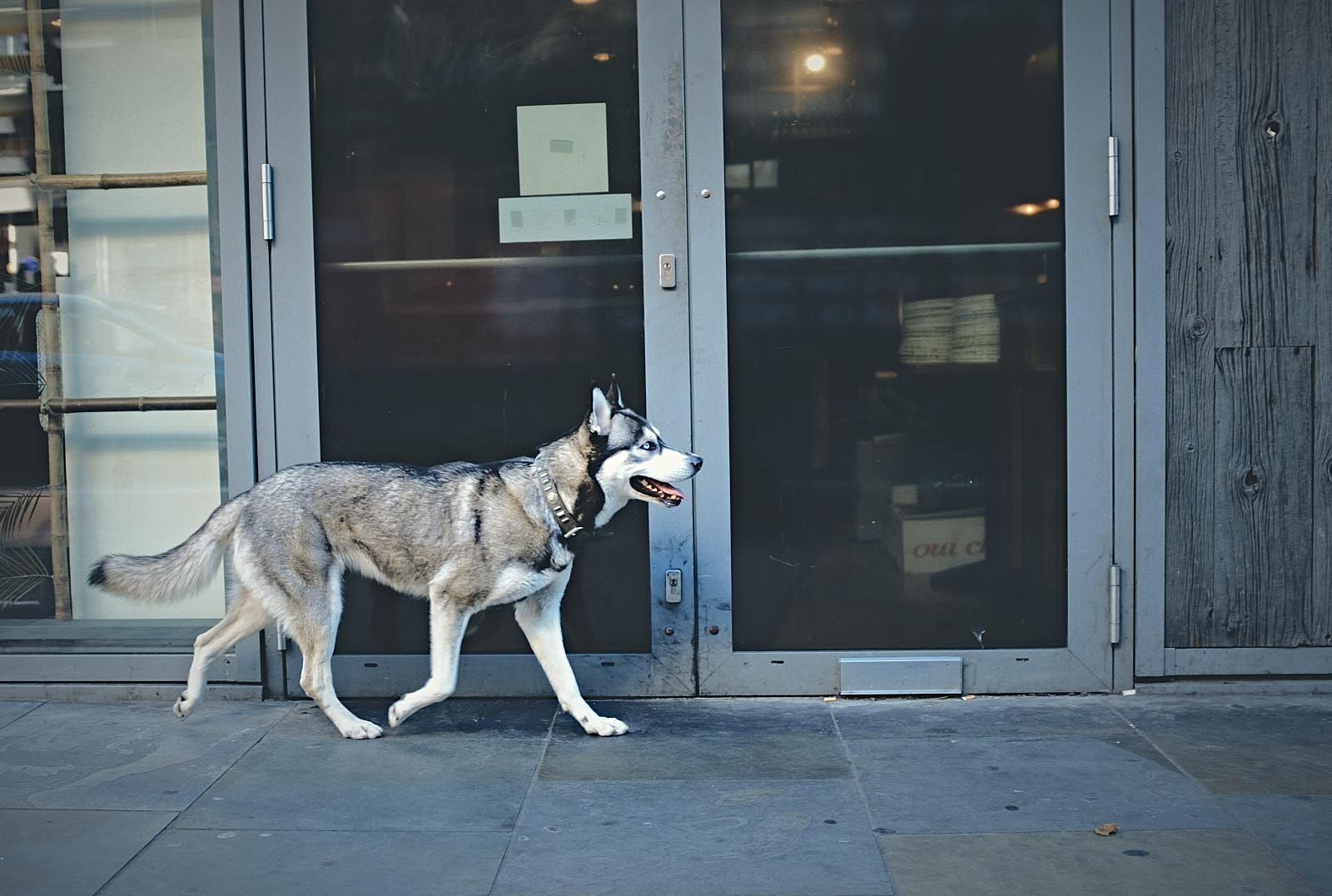 A werewolf in London !